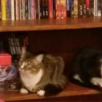 Shelved & organized kitties