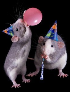 The Rats of Happiness